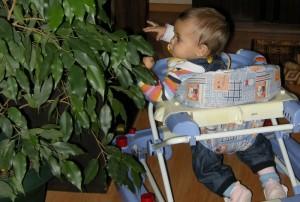 Кои растения са опасни за нашите деца